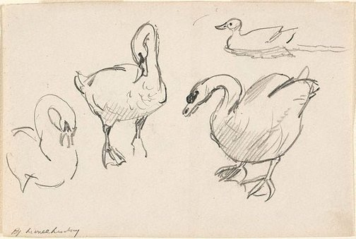 An image of recto: (Studies of swans and a duck) verso: (Further studies of a swan) by Lionel Lindsay